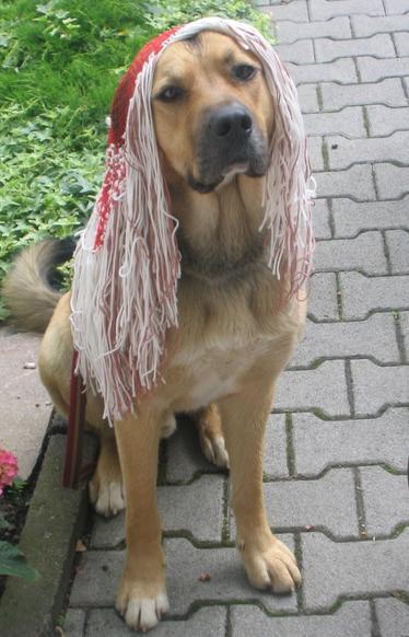 Mariettas Kolumne: Einmal Haustier, bitte!