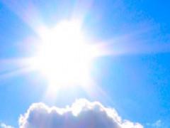 Förster kämpfen mit Auswirkungen des trockenen Sommers