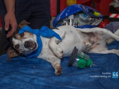 Leben retten mit Sauerstoffmasken für Tiere