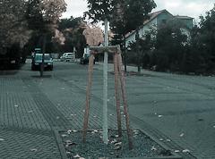 """Künftig keine """"weißen Bäume"""" mehr im Stadtgebiet"""