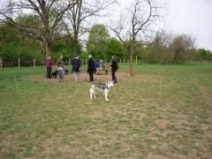 Artgerechte Hundehaltung in Mannheim
