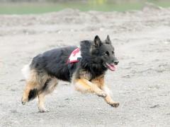 Rettungshundestaffel sucht Nachwuchs