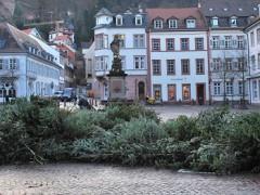 So werden Sie Ihren Weihnachtsbaum los