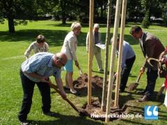 150.000 Euro für rund 500 neue Bäume