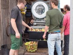 Hemsbacher Apfelannahmestelle an der Bergstraße gesichert