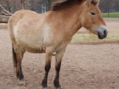 Pferde auf Feiertagsausflug