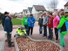 2500 Tulpenzwiebeln gepflanzt