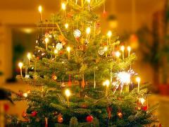 Abholung von Weihnachtsbäumen
