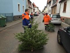 Weihnachtsbaum abzugeben?