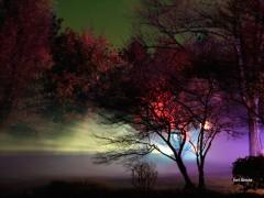 Grünes wird bei Nacht bunt