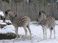 Ein gutes Zoo-Jahr beendet