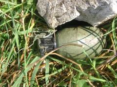 Handgranatenwurf auf Flüchtlingsheim – vier Tatverdächtige festgenommen