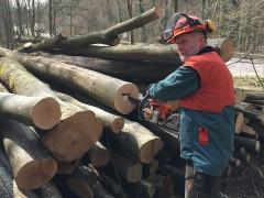 Kampf den Holzdieben