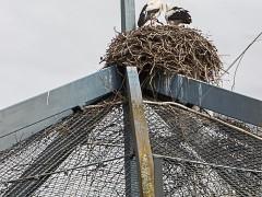 Vorsichtige Entwarnung wegen Vogelgrippe im Luisenpark
