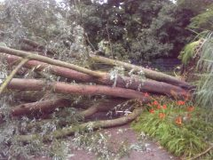 Schwere Sturmschäden im Luisenpark – Kelly-Konzert kann stattfinden