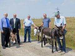 Esel und Rinder statt Rasenmäher