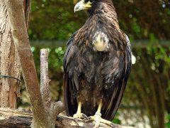Zuversichtliche Partnervermittlung im Zoo Heidelberg