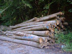 Forstarbeiten im Waldpark