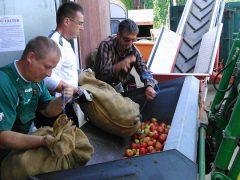 Apfelannahmestelle in der Weschnitzsiedlung Hemsbach ab September geöffnet