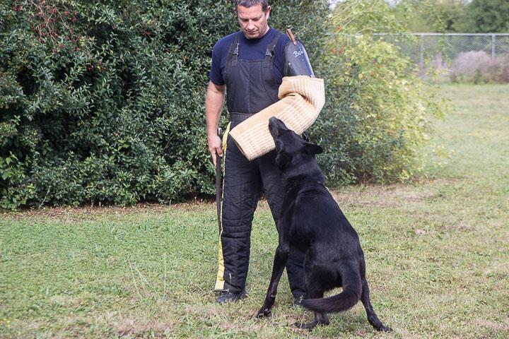 polizei-hundestaffel-mannheim-20160921-img_8962