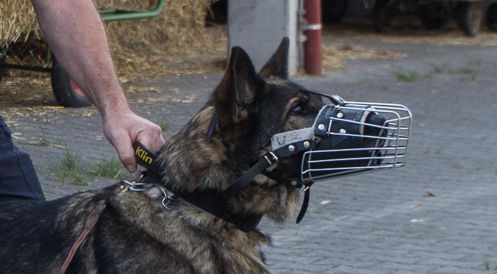 polizei-hundestaffel-mannheim-20160921-img_9050