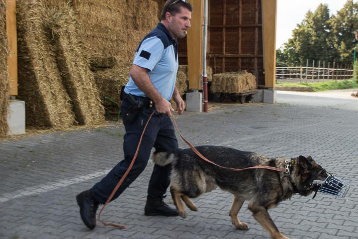 polizei-hundestaffel-mannheim-20160921-img_9052