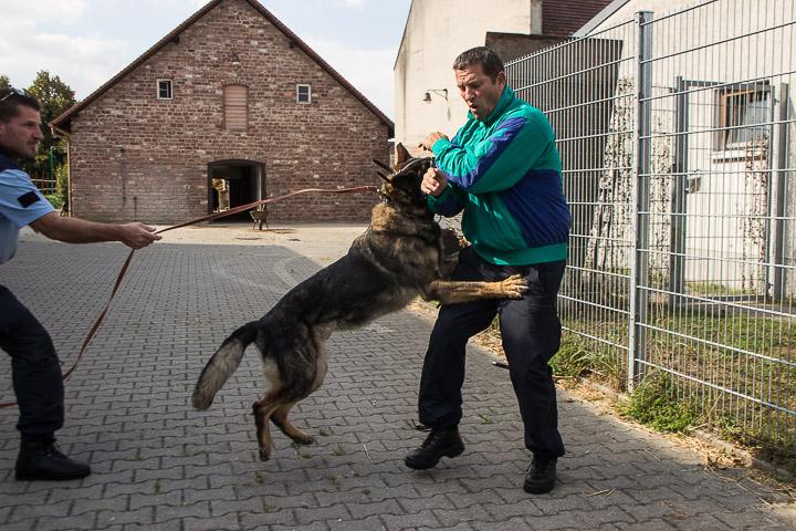 polizei-hundestaffel-mannheim-20160921-img_9058