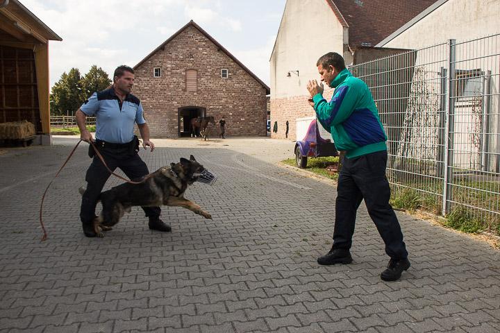 polizei-hundestaffel-mannheim-20160921-img_9061