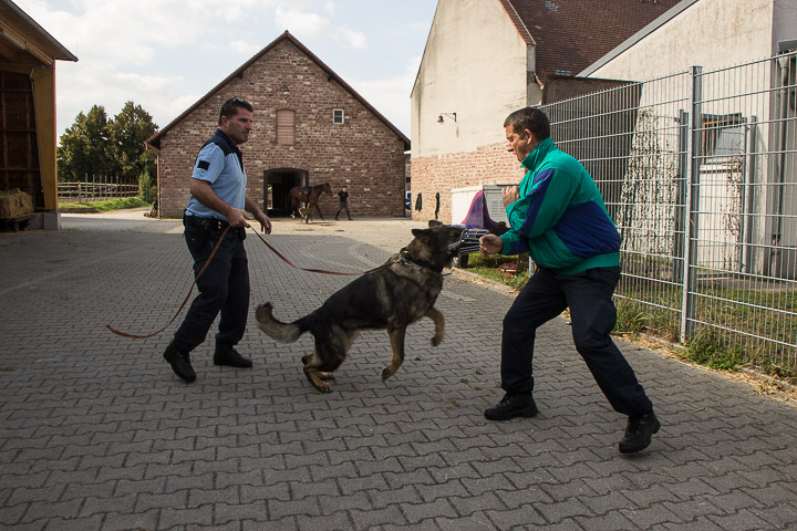 polizei-hundestaffel-mannheim-20160921-img_9062