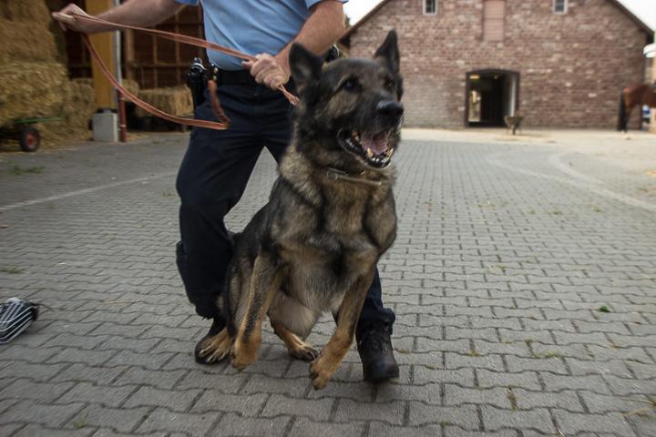 polizei-hundestaffel-mannheim-20160921-img_9074