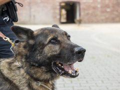 Polizei erschießt Schäferhund