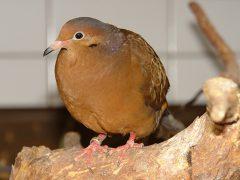 Zoo Heidelberg sorgt sich um seine Vögel
