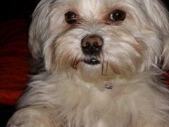 Polizei sucht Zeugen für Hunde-Diebstahl