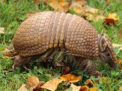Zoo Heidelberg – Artenreicher Start ins Neue Jahr