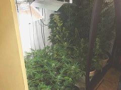 Polizei stelle Cannabis-Plantage und 180 Paar Sportschuhe sicher