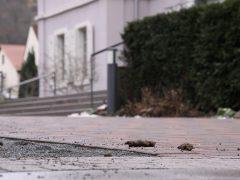 Stadt Hemsbach appelliert an Hundebesitzer
