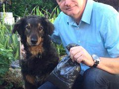 Viernheim im Kampf gegen Hundekot