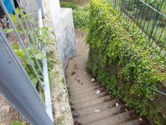 Gänsefamilie in Seckenheim verirrt