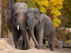 Zoo Heidelberg startet Kooperation mit WWF