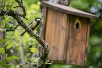 Insekten retten: Mehr Natur am Haus und im Garten