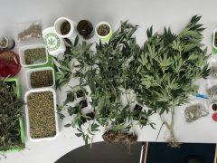 Größere Mengen an Betäubungsmittel beschlagnahmt