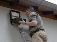 Fledermausschutz auf den Mannheimer Friedhöfen