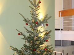 Frische Weihnachtsbäume direkt vom Förster