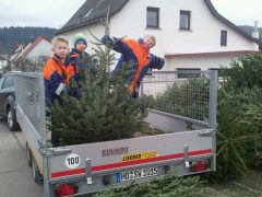 Weinheimer Jugendfeuerwehr sammelt Christbäume