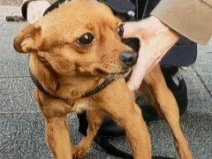 Vor Supermarkt angeleinter Hund gestohlen