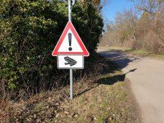 Verkehrsteilnehmer Amphibien machen die Straßen unsicher